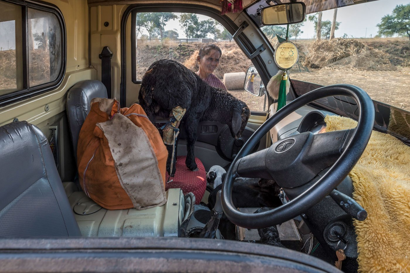 During the migration walks, great care is taken to safeguard the wounded or ill animals – here, a wounded goat had occupied the front passenger seat of a van.