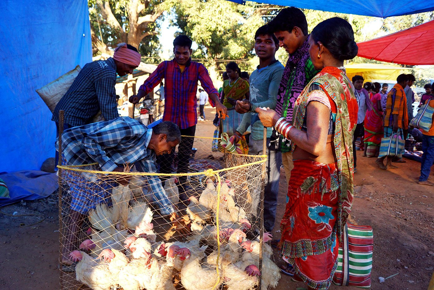 These days, broiler chicken is sold at the haat because it is cheaper than desi (country) chicken