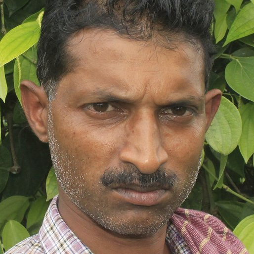 BIJUMON THOMAS is a Pepper plantation worker from Karimkulam Chappath, Kattappana, Idukki, Kerala
