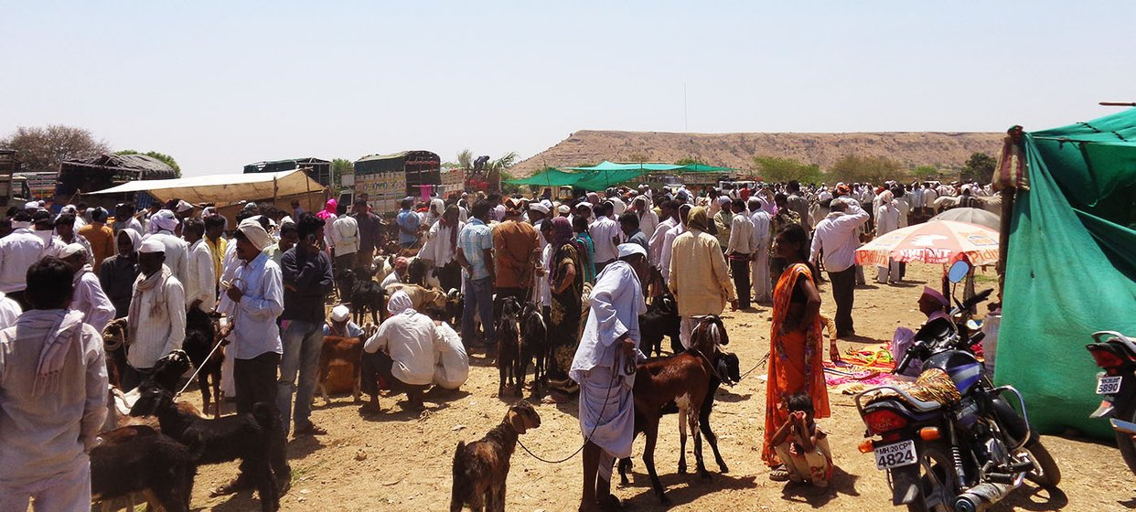 the weekly cattle market at Adul