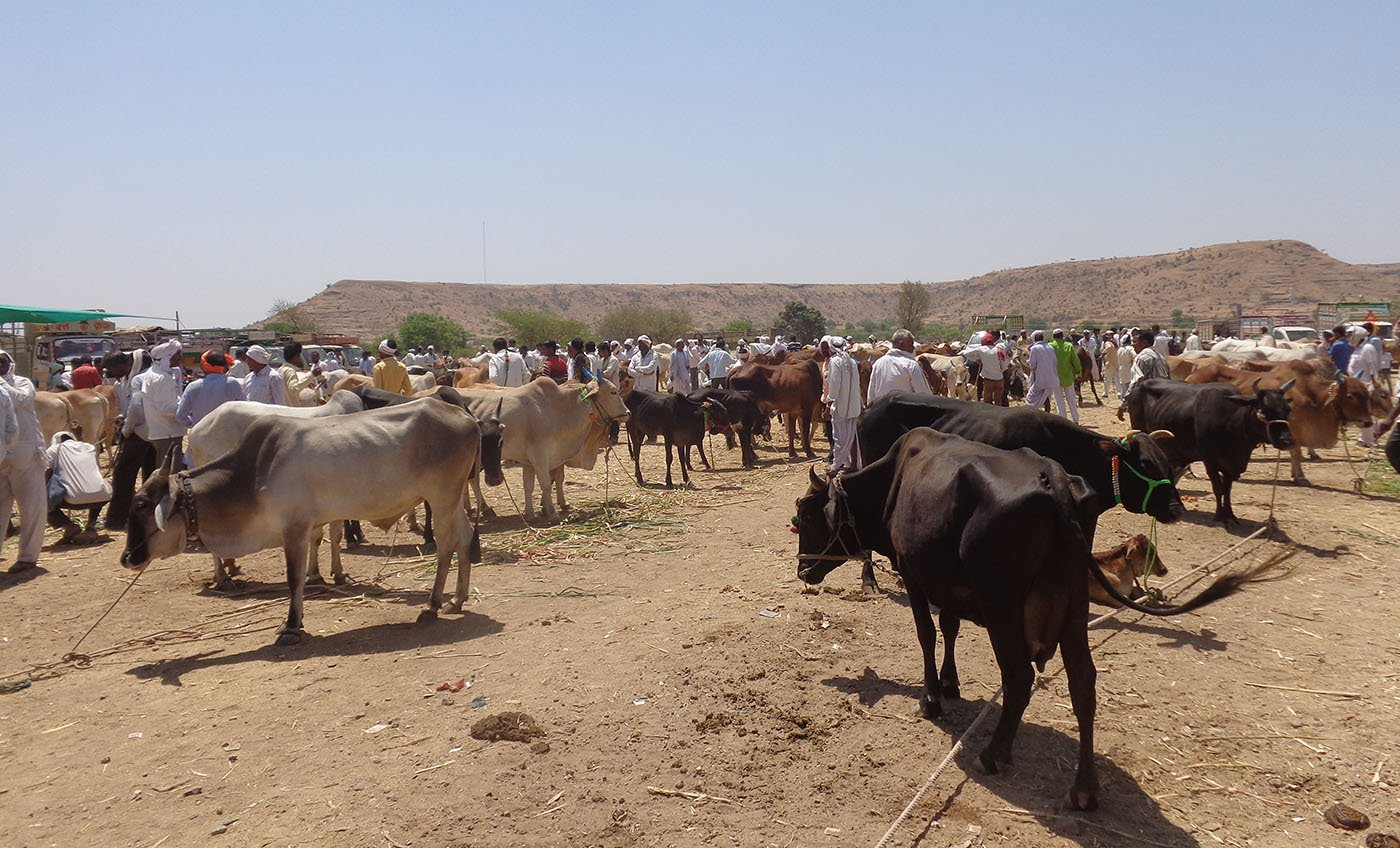 Cattle market at Adul