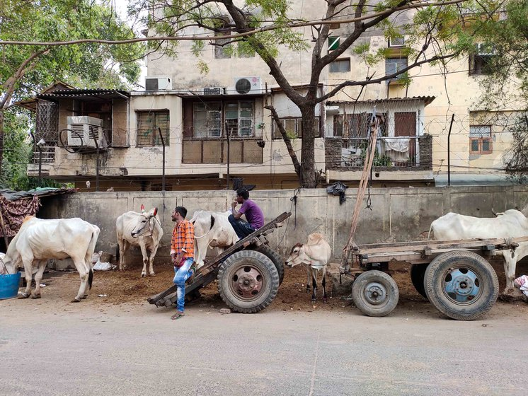 The densely-packed Motia Khan locality is home to many bullock carts owners, who park their animals and carts on the streets (left); among them is 18-year-old Kallu Kumar (right), who says, 'I had to follow in my father's footsteps and ride the cart'