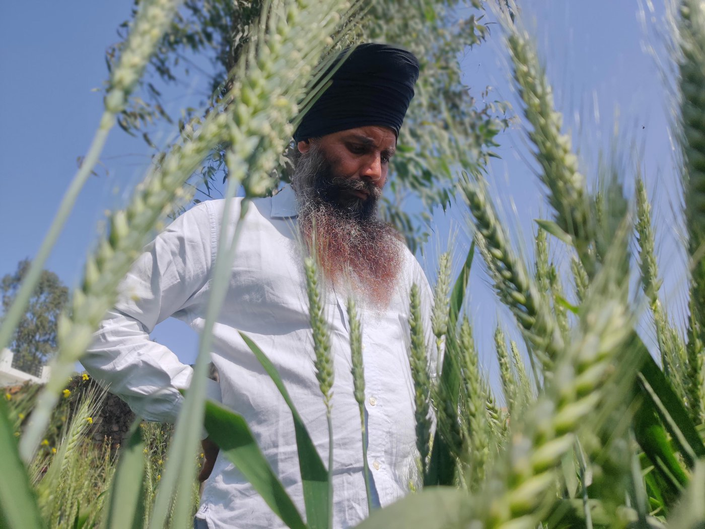 Sukhdeo Chanchal Singh in his farm