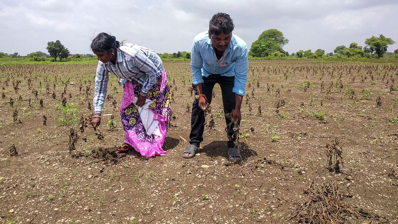 man and woman working in field