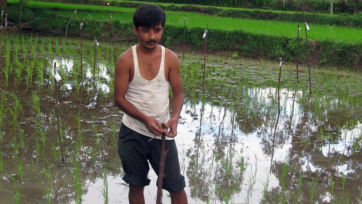 Man standing in paddy field