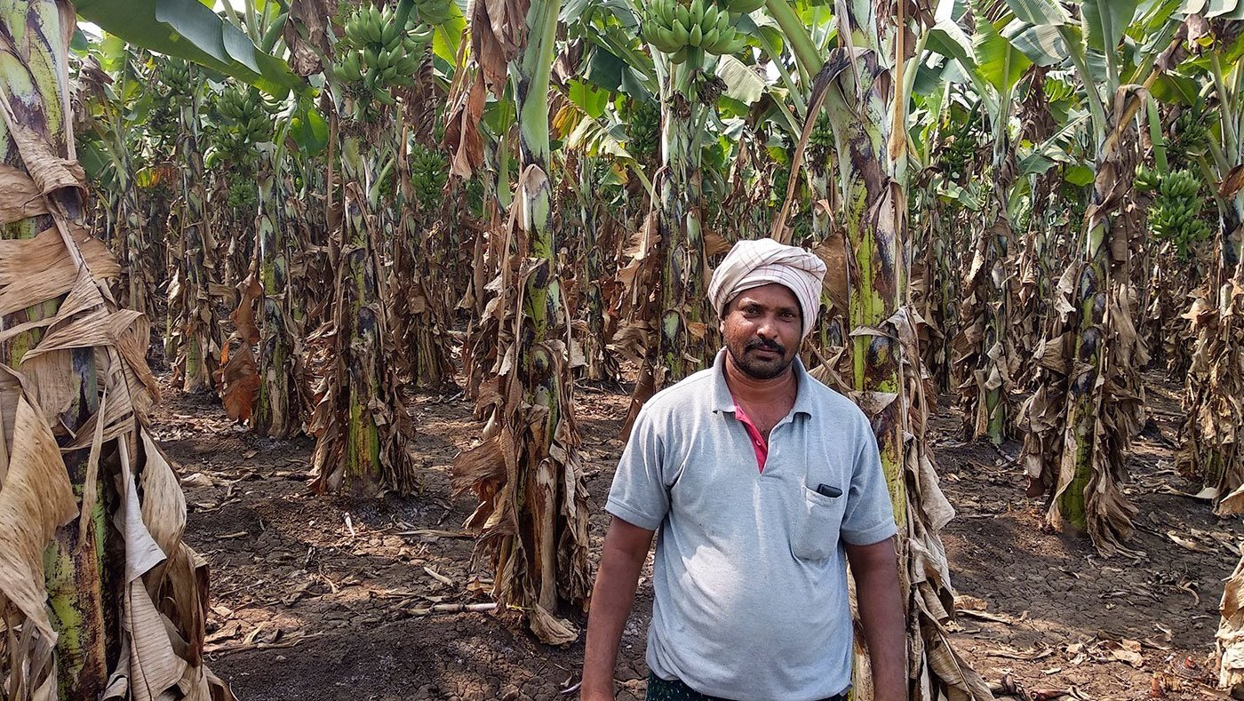 Man standing in banana plantation