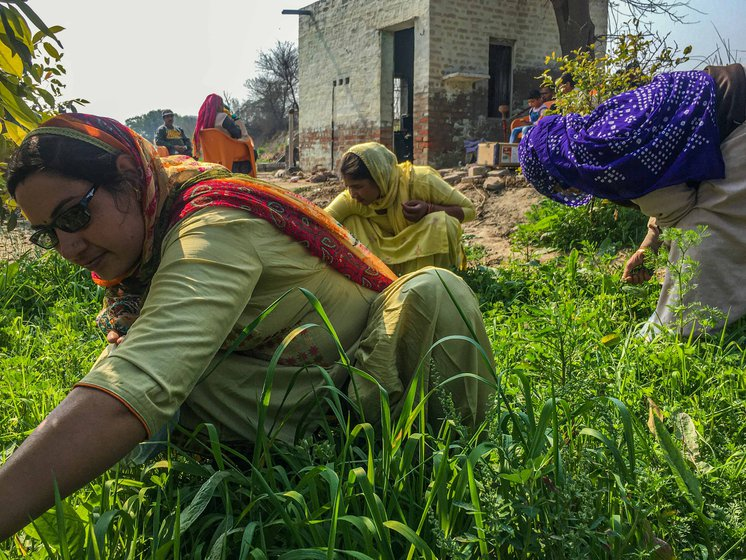 Vegetables and fruits, planted by Shanti in small patches of the family lands, are plucked by the women for consumption at home