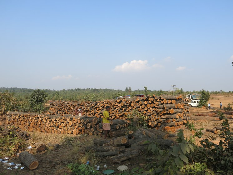 Left: The villagers say income from forest produce helped them build this high school in the village. Right: In a large clearing, under the watch of company staff, hundreds of freshly logged trees are piled up