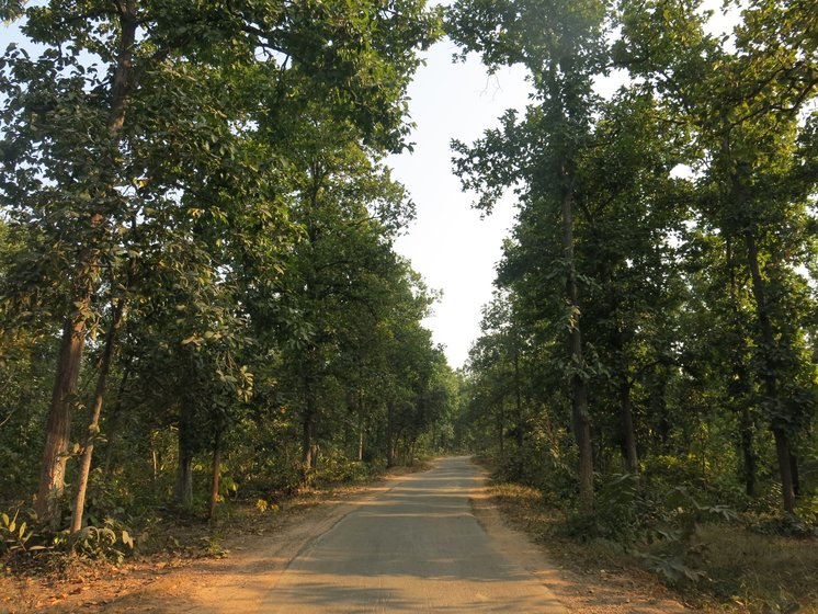 Left: The road to Patrapali village winds through dense community-conserved forests. Right: In the mixed deciduous forests of Talabira village, these giant sal and mahua trees lie axed to the ground