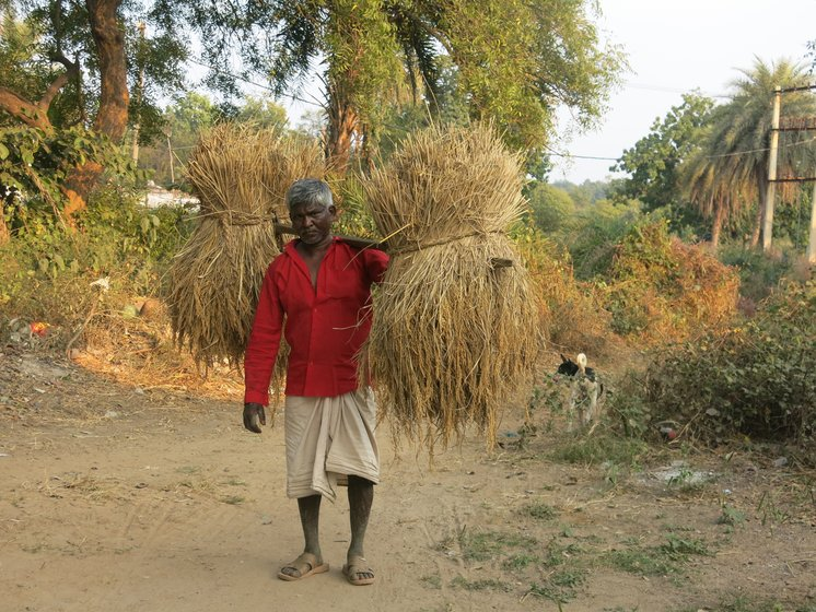 Left: Across the villages, many homes have vegetable farms adjoining homesteads. Right: Many like Hursikes Buriha also depend on paddy cultivation