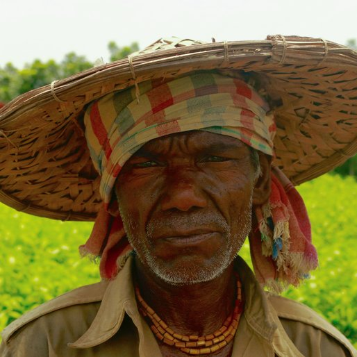 SHANTILAL BISWAS is a Farmer from Tatla, Krishnagar II, Nadia, West Bengal