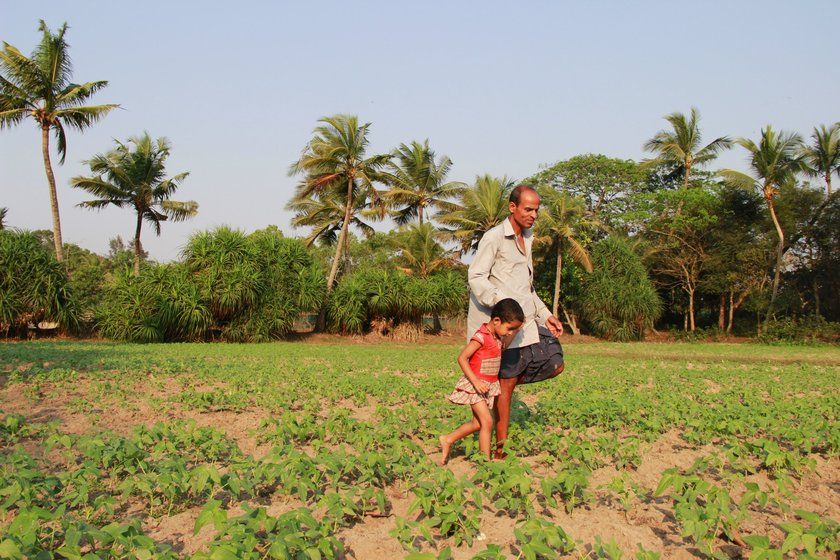 Village priest Birendra Samantray takes a walk in his lentil farm with granddaughter Haripriya