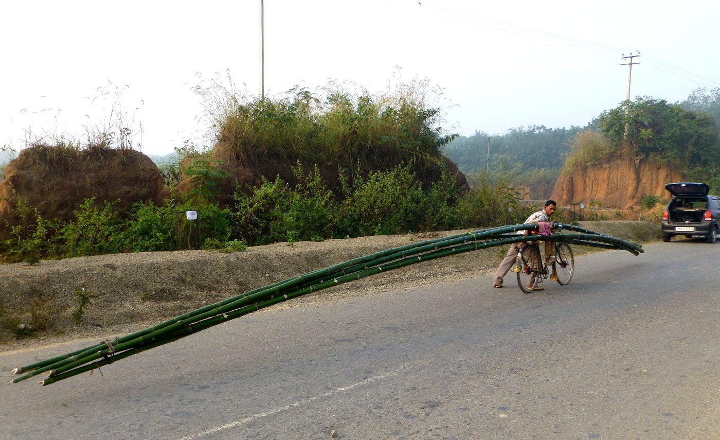 a man balancing bamboos on his bike