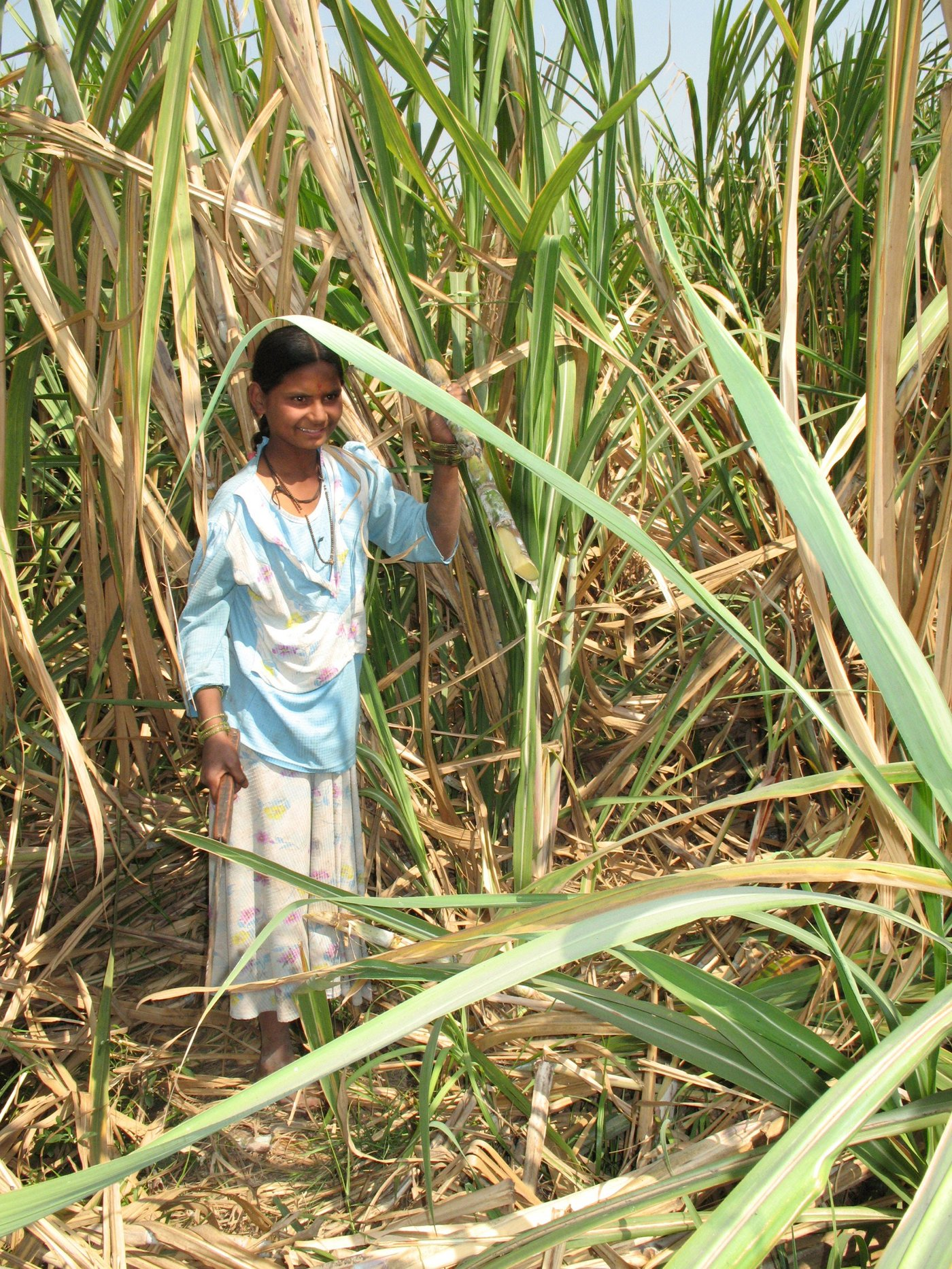 Rukhmini Shingte  cutting sugarcane stalks