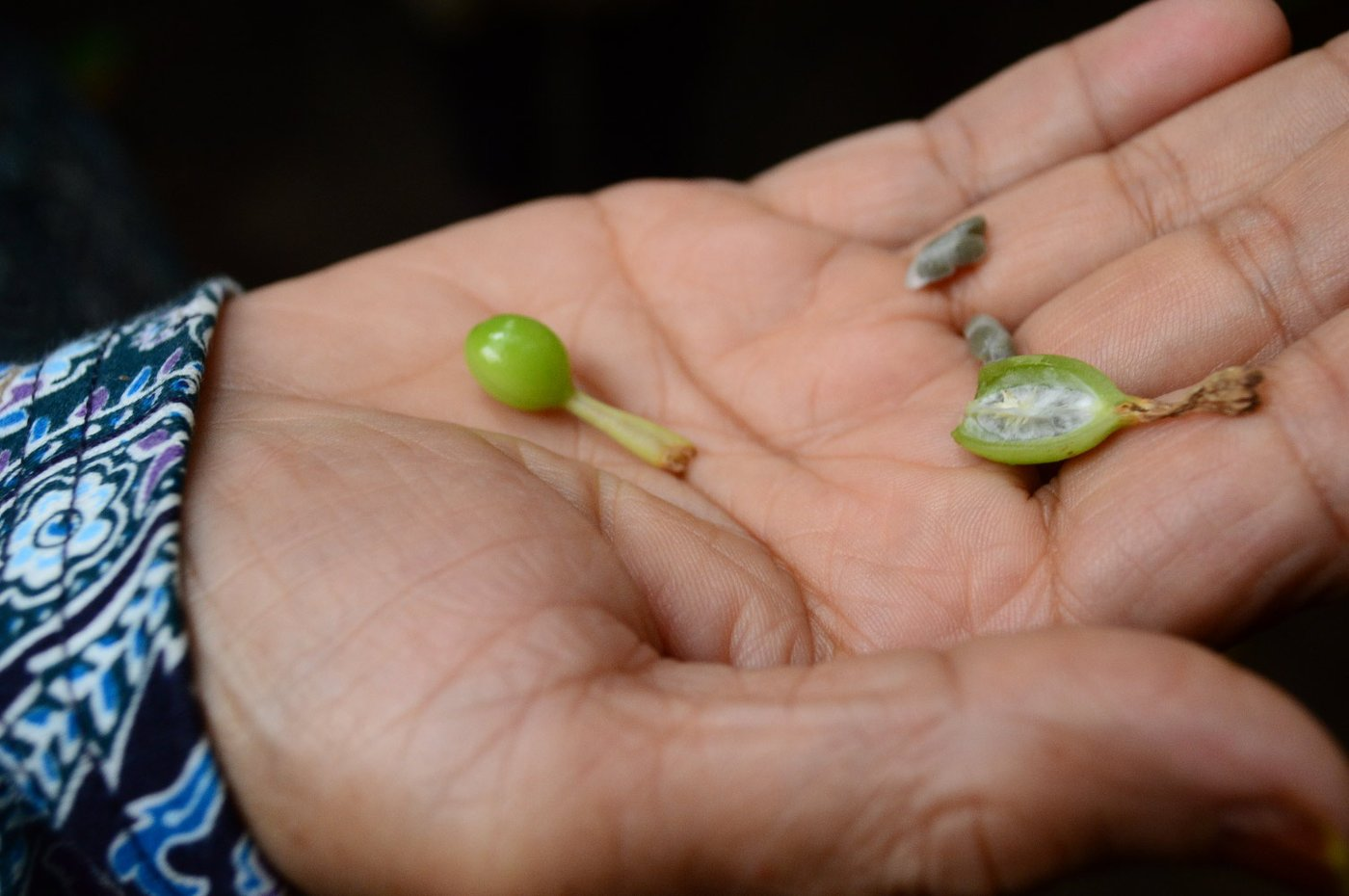 Herb seeds on hand