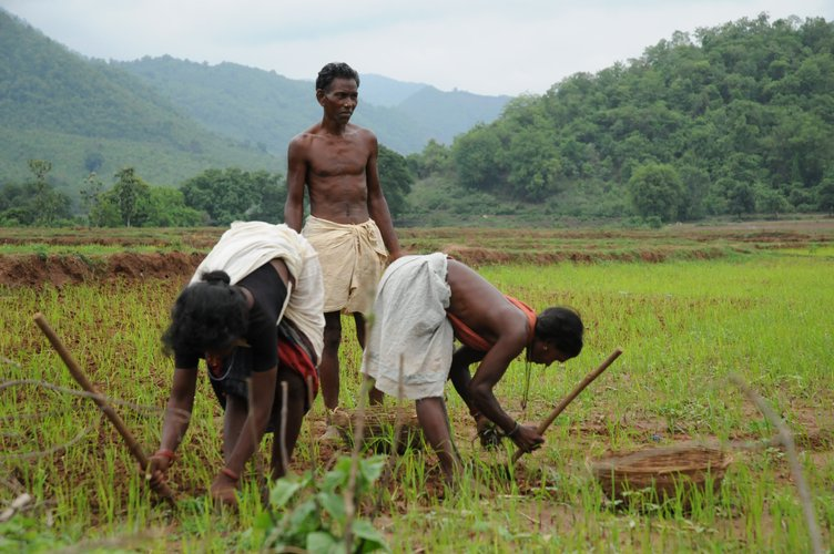 indian farmers essay India is a land of villages a majority of her population lives in villages most of them are farmers agriculture is their main occupation related articles: essay on the life in an indian.