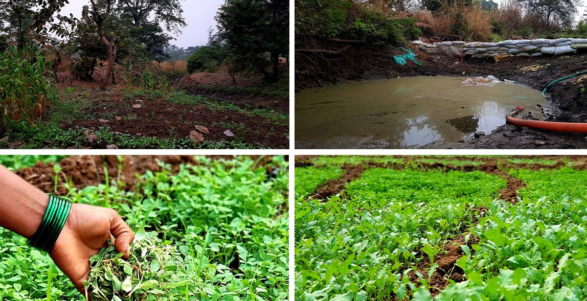 Top row: The stream that flows by their land has a trench at one end to store water. It is created by a bund made from sacks. Bottom row: Methi and palak are some of the vegetables that the Pared family cultivates