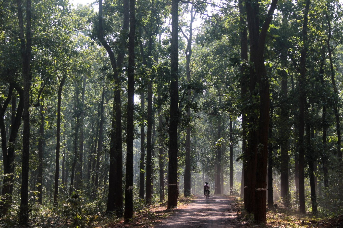 Forested Road with cycle