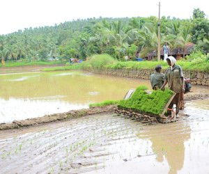 Man and woman in paddy field in Varavattoor village.