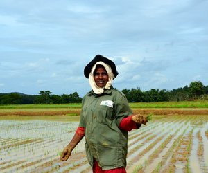 Woman sowing rice in paddy field