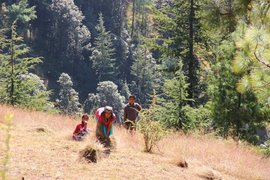 The hill-women of Himachal