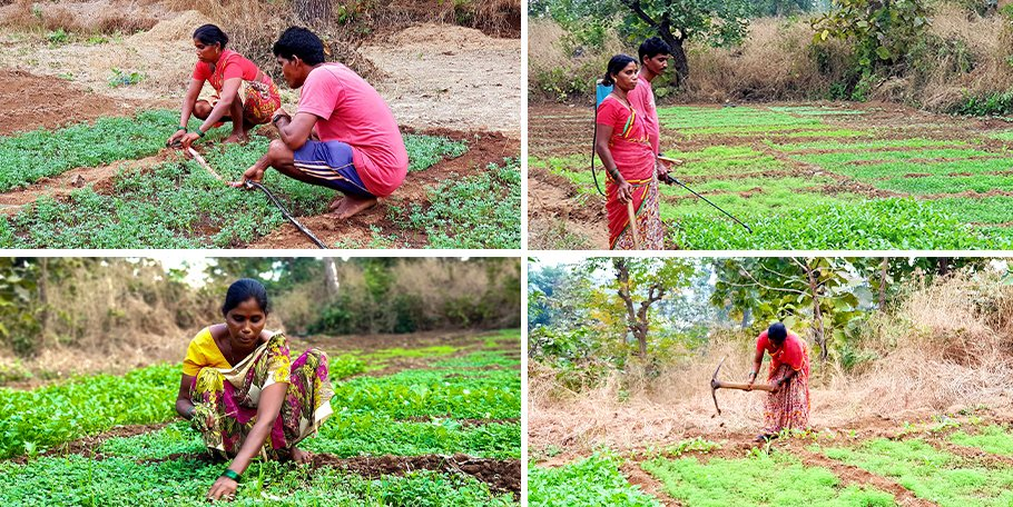 Jayashree and Ramchandra Pared grow vegetables and paddy on their one acre; with the land title they received under the FRA, they no longer have to migrate to the brick kilns